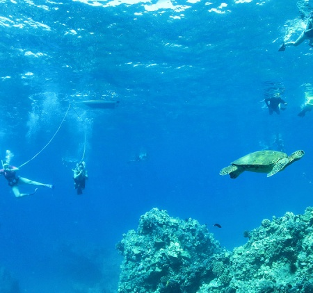 What is SNUBA Diving?