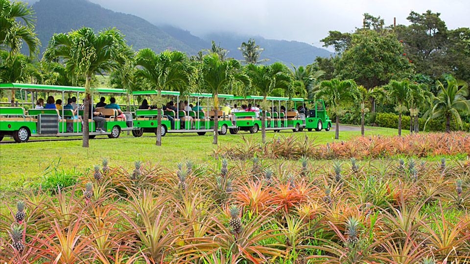 Best Activities Kids Maui Tropical Plantation