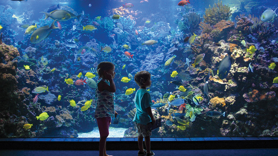 Best Kids Activities Maui Ocean Center
