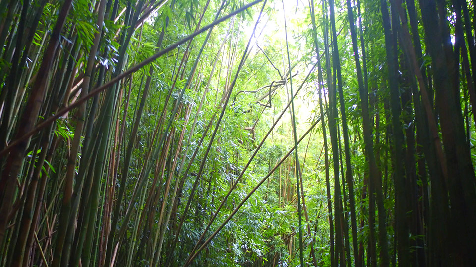 Beaten Path Bamboo Forest
