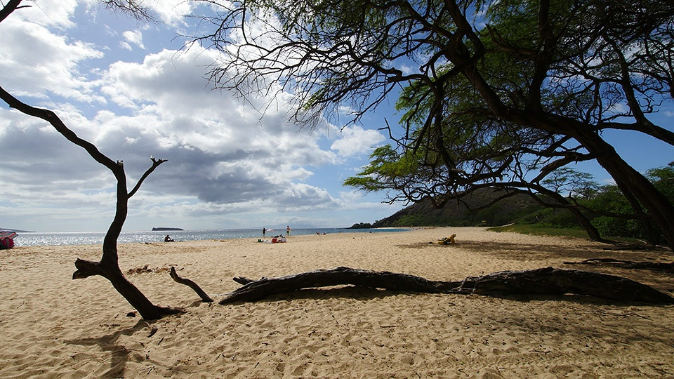 Best Maui Free Activity Sightseeing