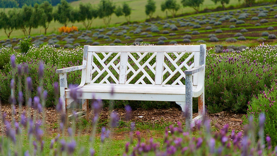 Best Maui Made Lavender Farm