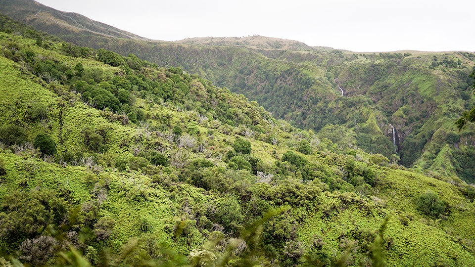 Waihee Ridge Trail Tours Maui