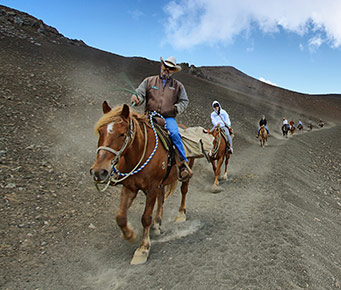 Best Haleakala Maui Activities Horseback Riding