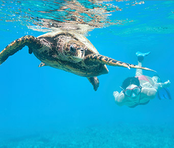 Maui Snorkel Video Turtle Underwater