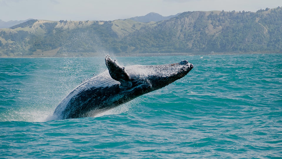 Best Videos Whale Watching