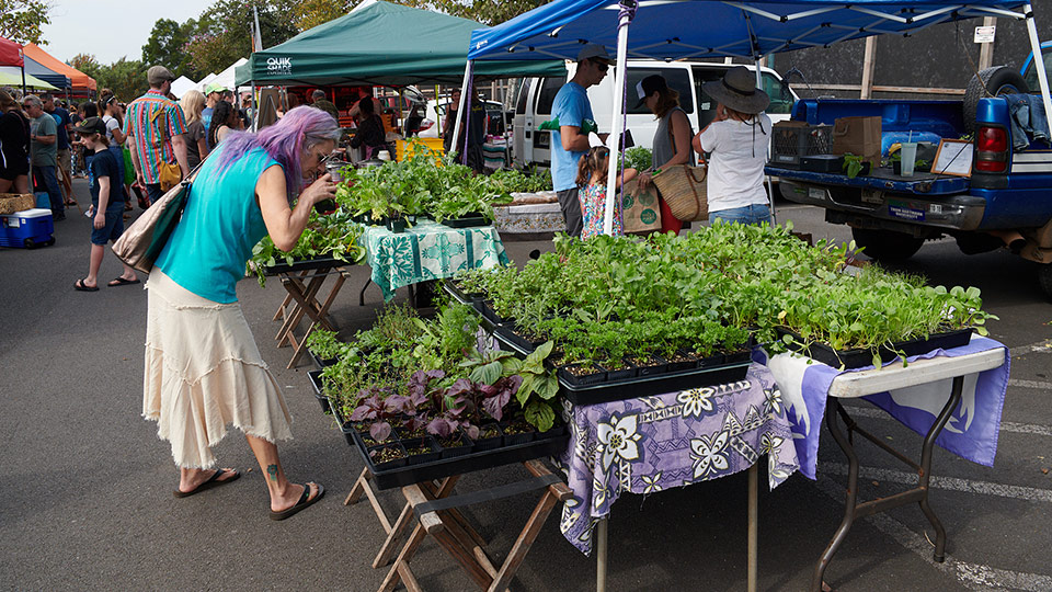 Locally Grown Upcountry Market Maui