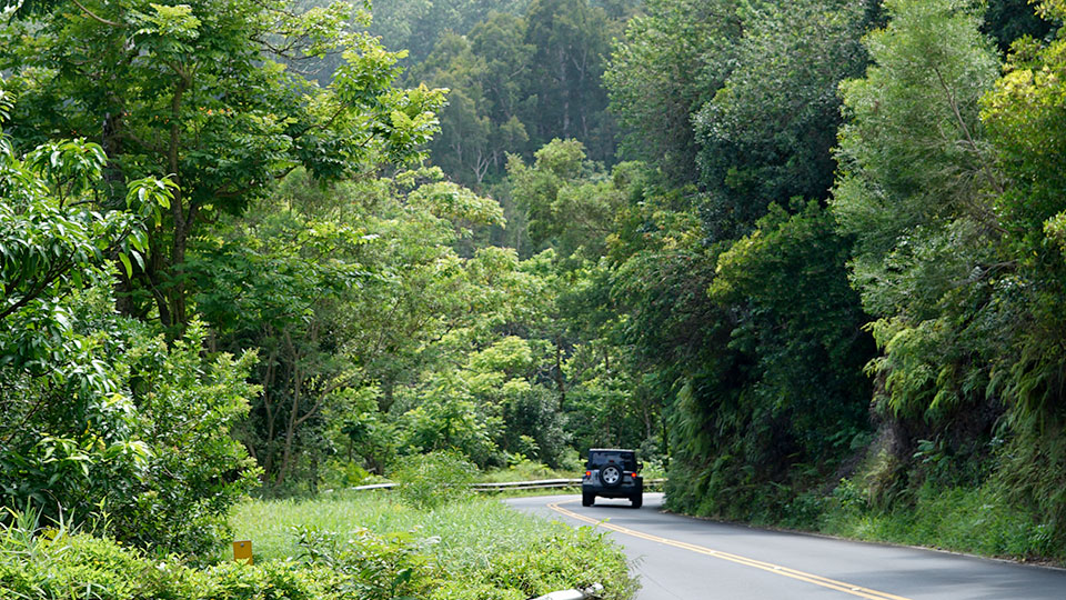 Best Maui Videos Driving Road to Hana
