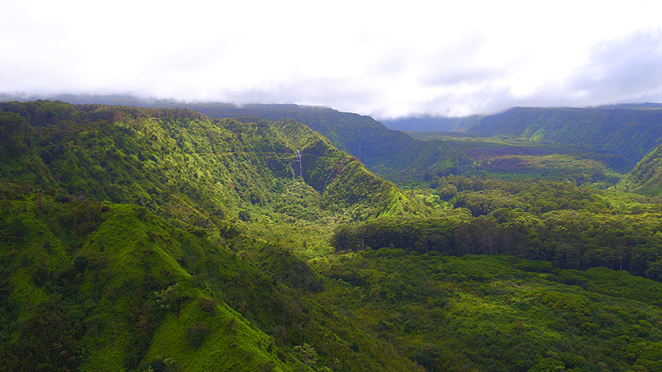 E. Maui Watershed Project non-profit