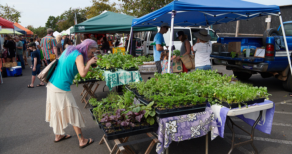 Maui Best All Organic Upcountry Farmer's Market