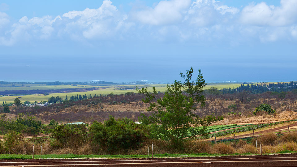 Best Maui Plantation Evonuk Farms