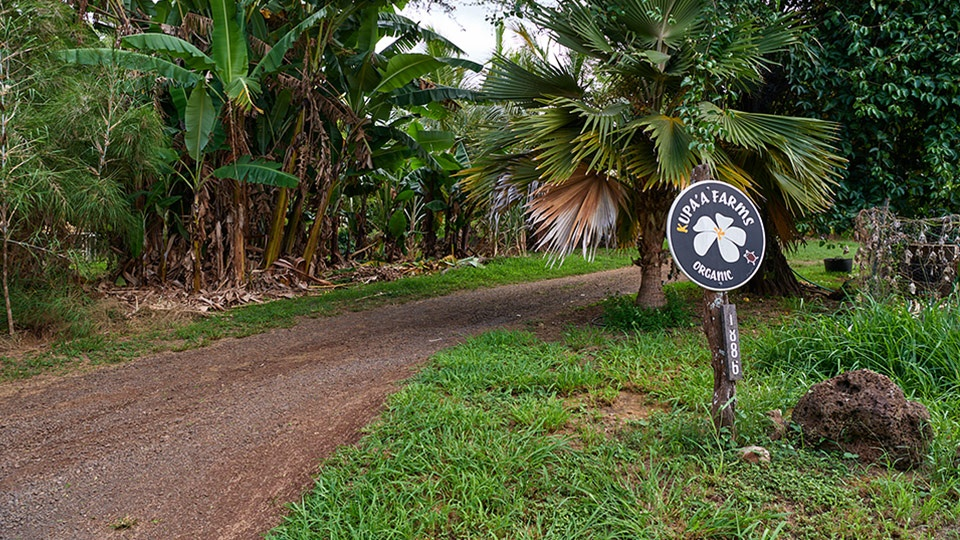 Hawaii Best Organic Kupa'a Farms