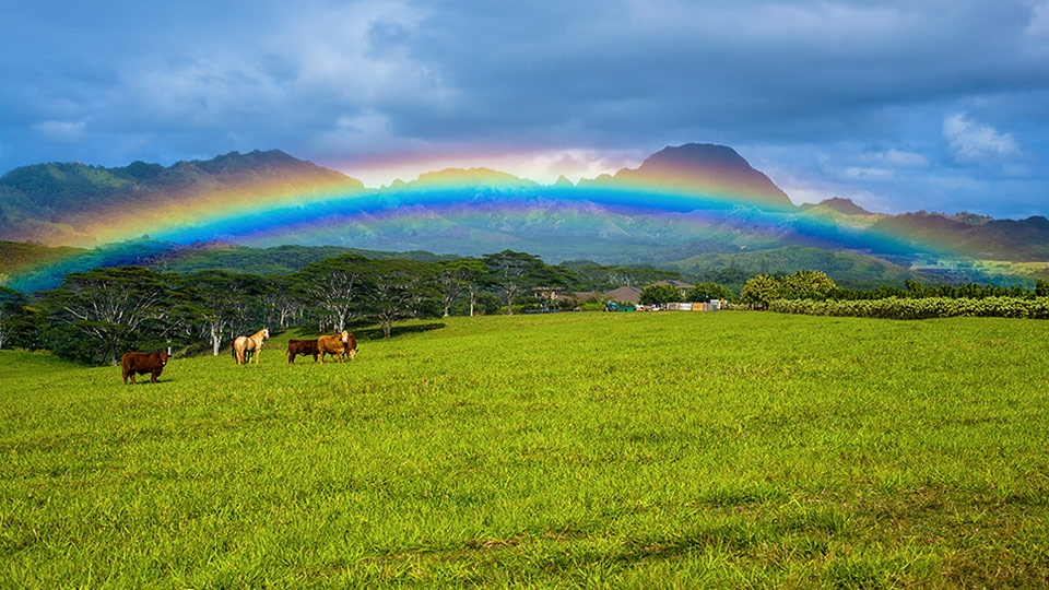 Hawaii Best Organic Kauai Organic Farms