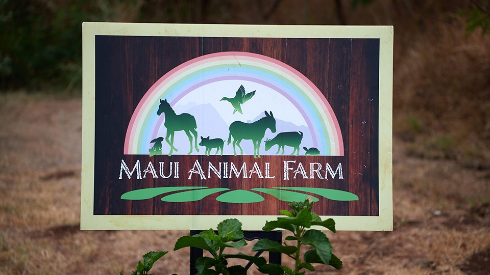 Best Plantation Animal Farm Maui