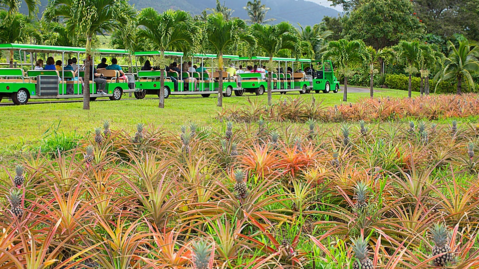 Best Kahului Wailuku Maui Tropical Plantation