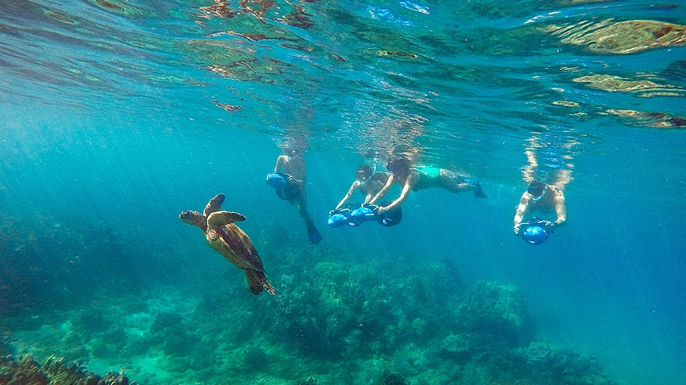 Best Wailea Sea Scooter Snorkeling