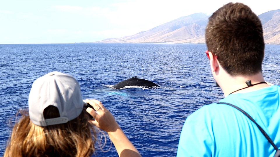 Top Budget Activities Maui Whale watching