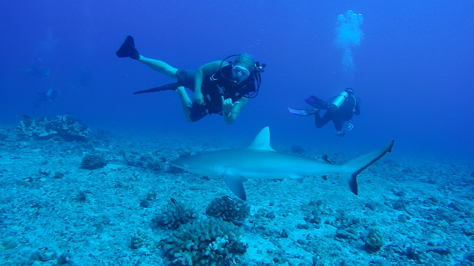 Best Maui Land Activities Sharks Dive