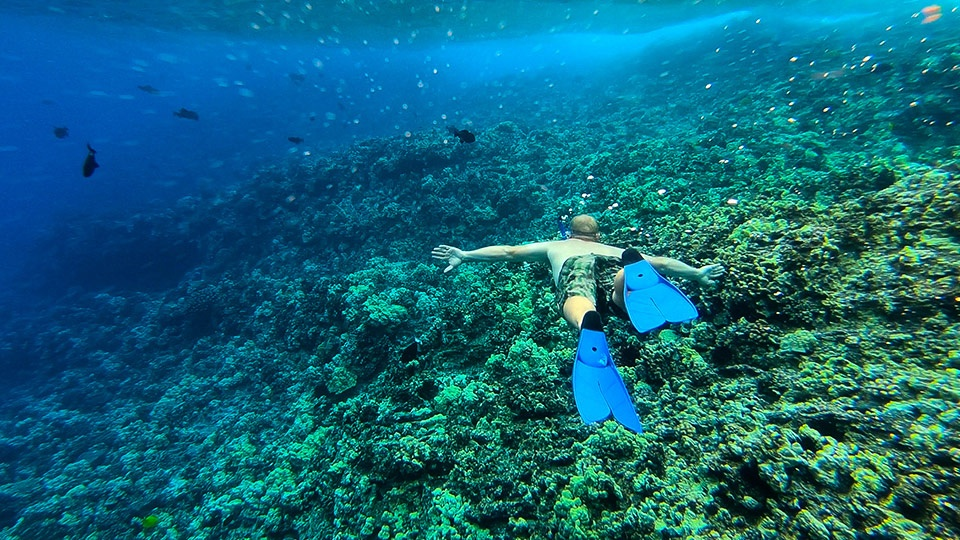 Best Kihei Activities Snorkeling