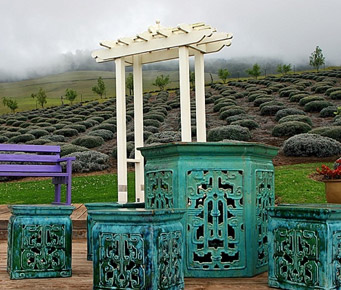 Best Upcountry Maui Activities Lavender Farm
