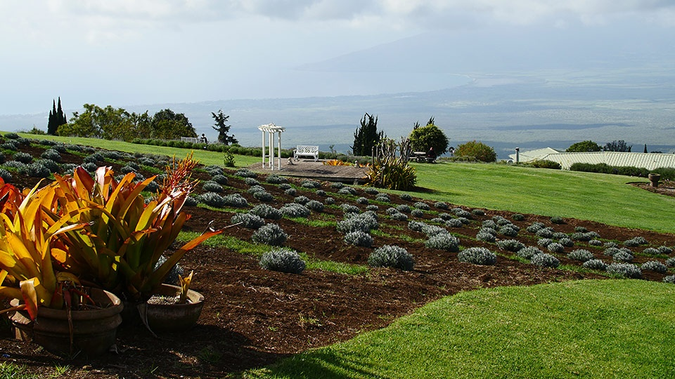 Best Upcountry Activities Lavender Farm