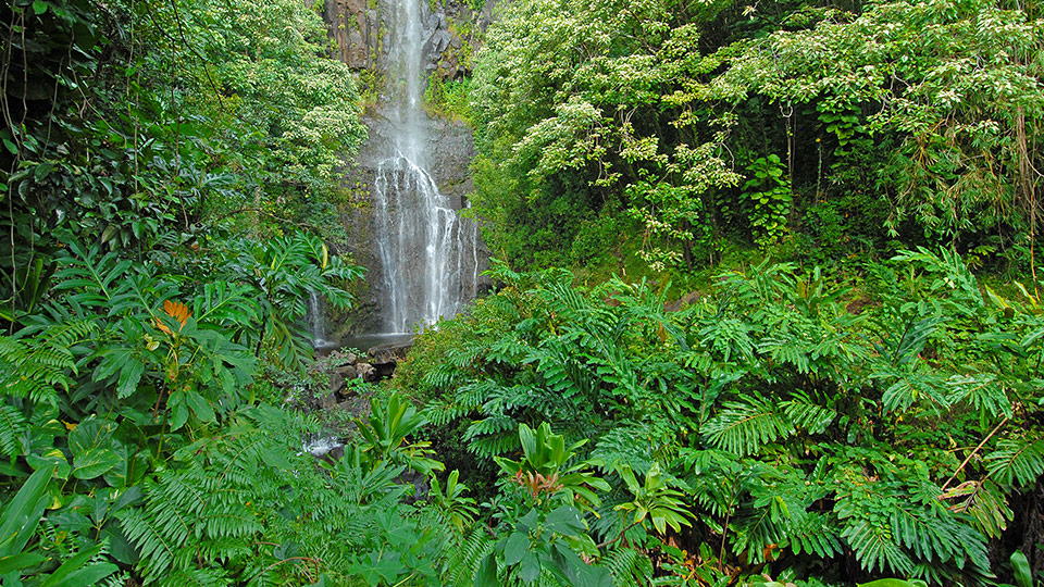 Waimea Valley Top Hawaii Wedding Location