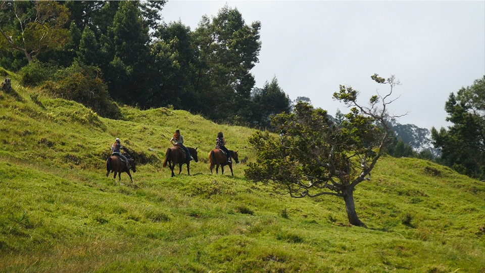 Best Hawaii Activities Horseback Riding