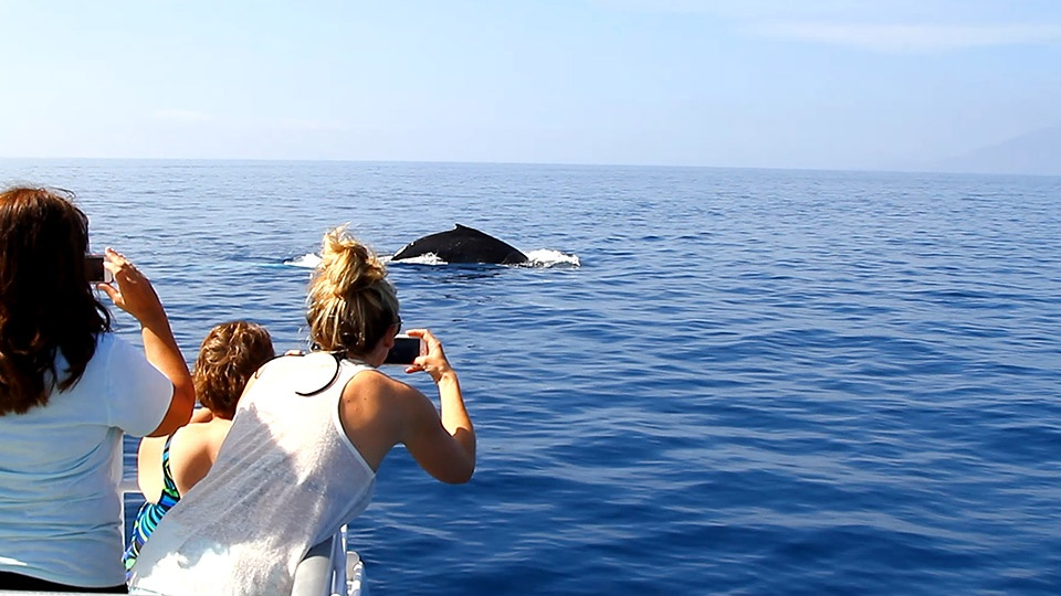 Best West Maui Whale Watch