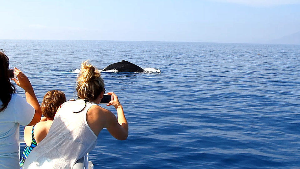 Best Maui Ocean Activities Whale Watching
