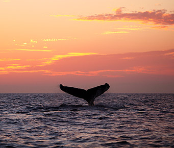 Maui Whale Watching Which Hawaii Island Should You Visit?