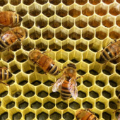 Top Organic Maui Bees Honey Hive