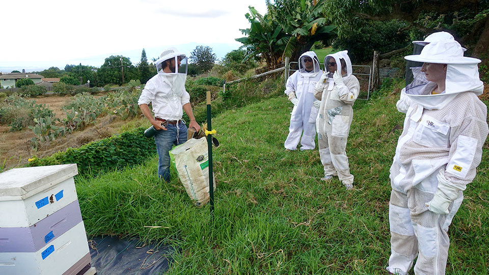 Hawaii Top Organic Maui Bees Honey Hive