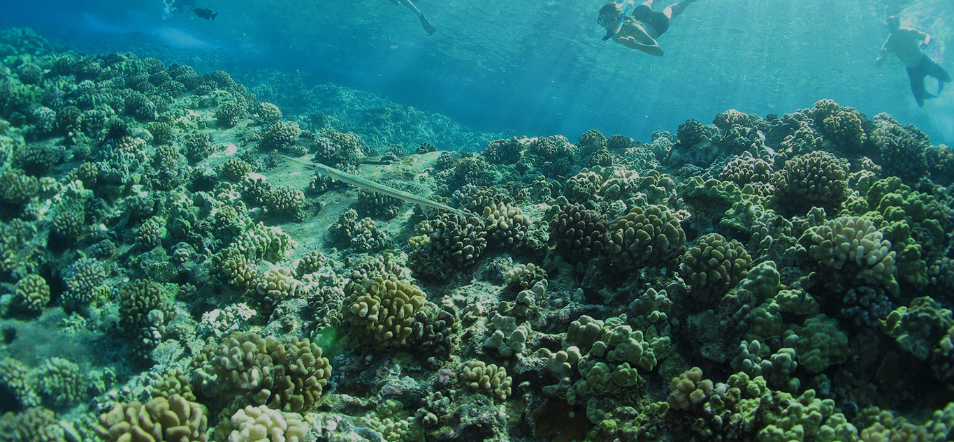 Save Hawaii's Coral Reefs