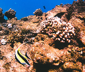 Help Conserve Maui Coral Reef