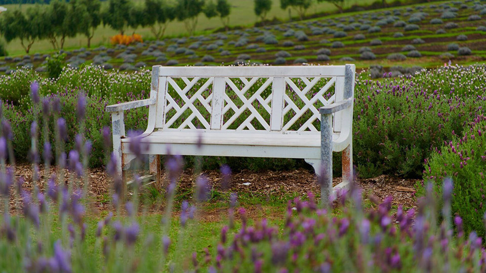 Best Maui Lavender Farm