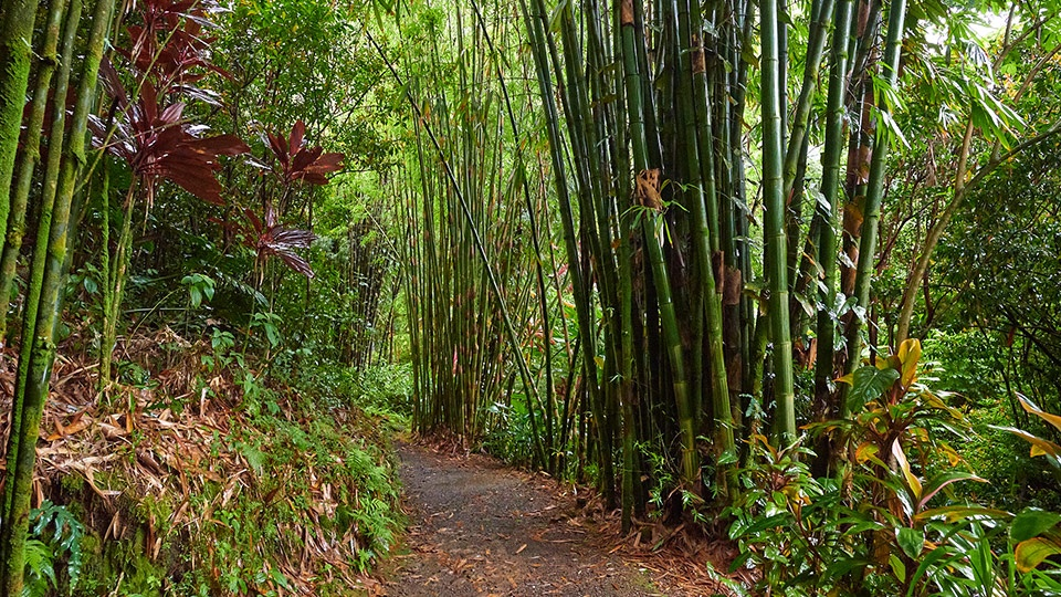 Best Maui Activities Hiking