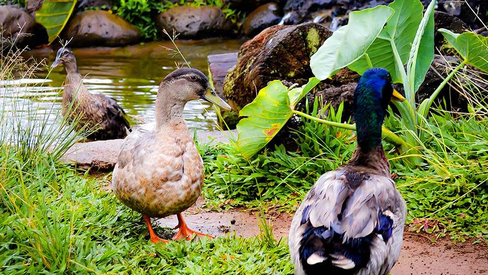 Best Maui Activities Leilani Farm Sanctuary