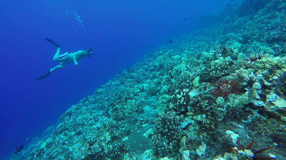 Best Maui Activities Molokini Snorkel