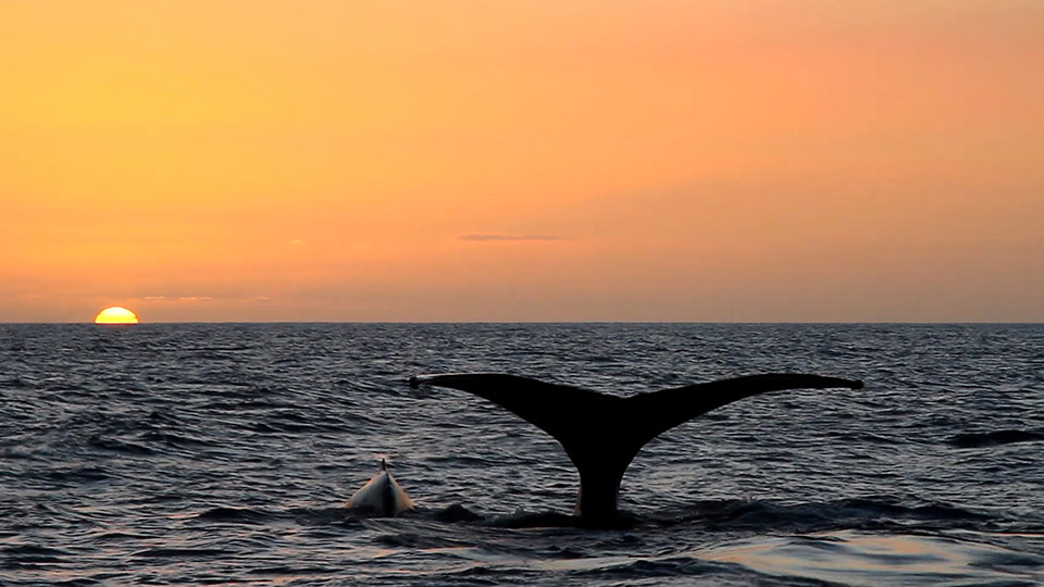 Best Maui Activities Whale Watching