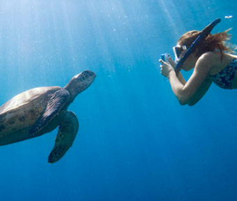 Best Underwater Turtle Snorkel Molokini Maui Hawaii Activities