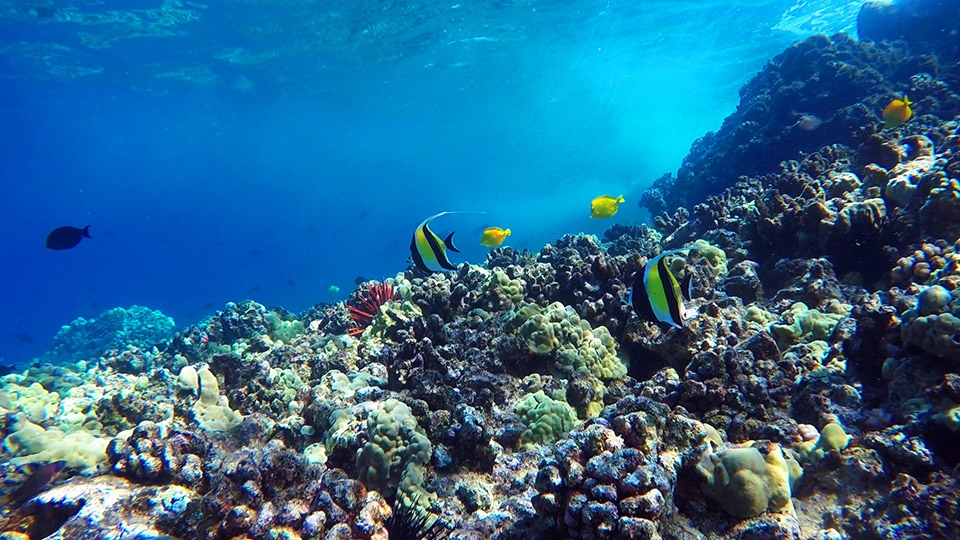 Maui underwater life coral reefs