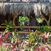 Best Maui Drinks Mama's Fish House