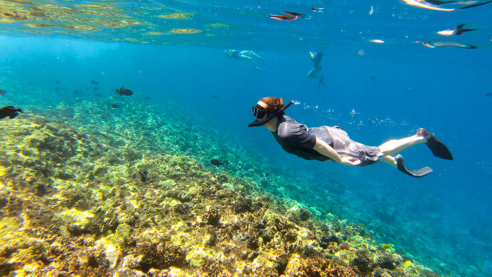 Snorkeler at Molokini Crater Reef