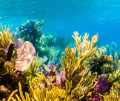 Maui Hawaii Healthy Reef Conservation