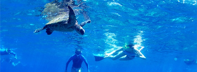 Snorkeling with the turtles at Turtle Reef