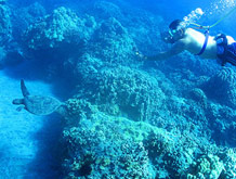 Maui Hawaii Coral Reef Snorkel Adventure Tour