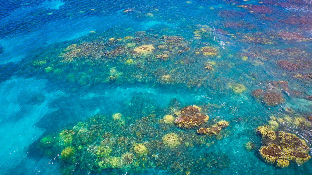 Coral Gardens Maui Snorkeling Trips And Information