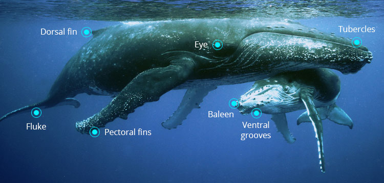 whales biology - Picture Of A Whale