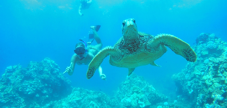 Maui Best Turtle Snorkel Adventure Cruise