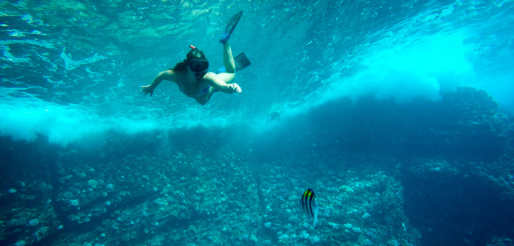 Snorkeler swimming over coral reef in maui hawaii